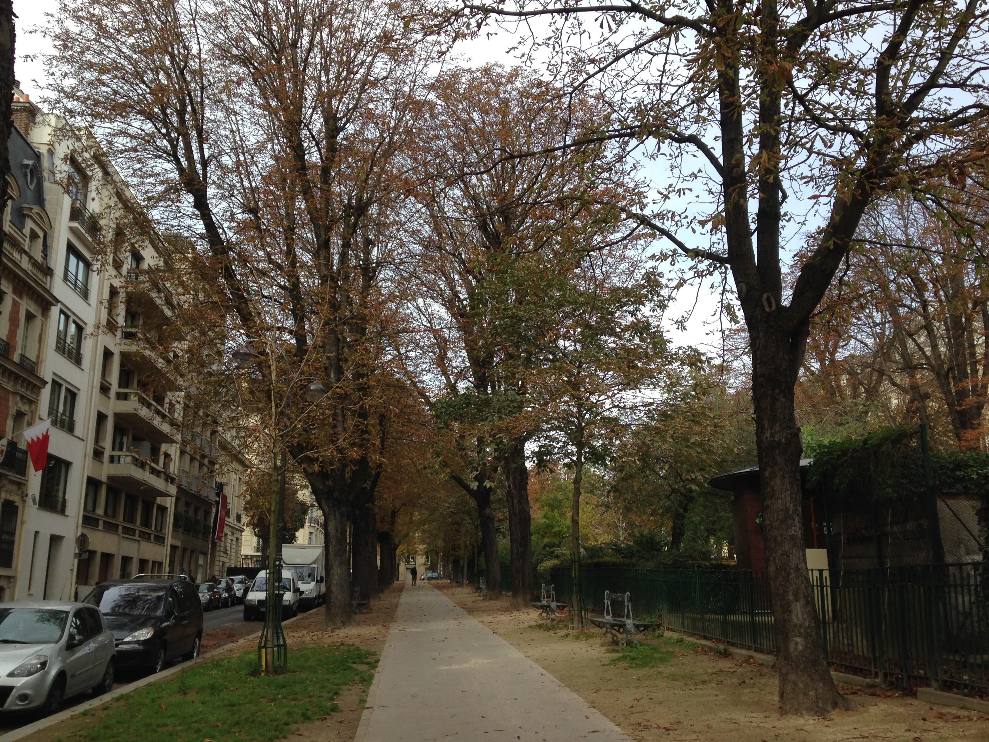 公園のクリの木